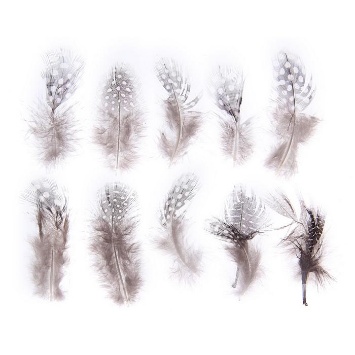 1250975 Набор перьев для декора 10 шт, размер 1 шт 5*2 цвет коричневый с белым