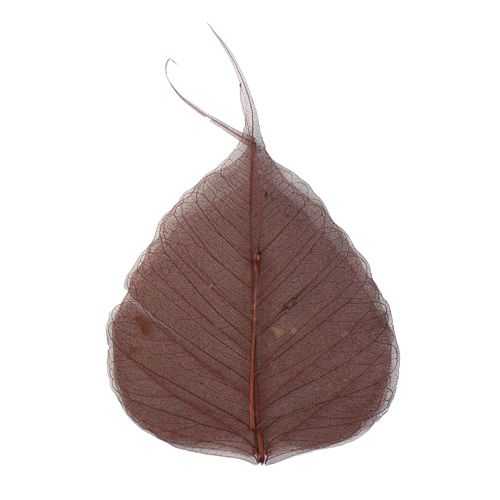 63803956 Скелетированные листочки, красно-коричневый, 60 г, упак./10 шт., Glorex