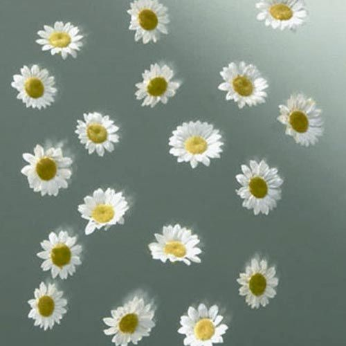 63803594 Бумажные цветочки 'Маргаритки', d 20 мм, упак./18 шт., Glorex