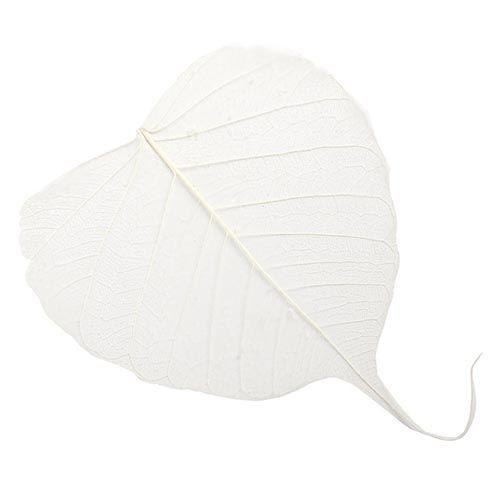 63803951 Скелетированные листочки, белый, 60 г, упак./10 шт., Glorex
