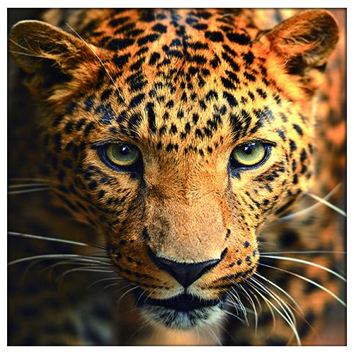 АЖ-1400 Картина стразами 'Портрет леопарда' 30*30см